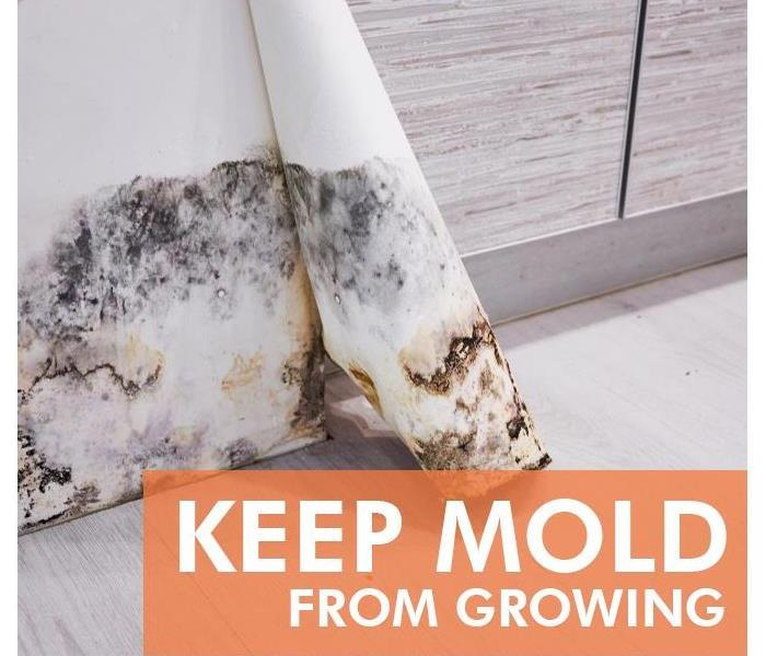 Mold Remediation 3 Places Mold Likes To Hide